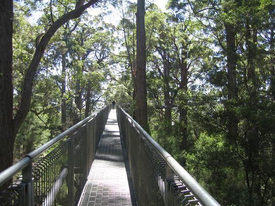 Valley Of The Giants: Tree Top Walk