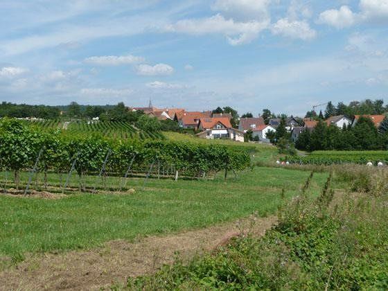 large_4881046-On_the_way_to_Schweigen_Wissembourg.jpg