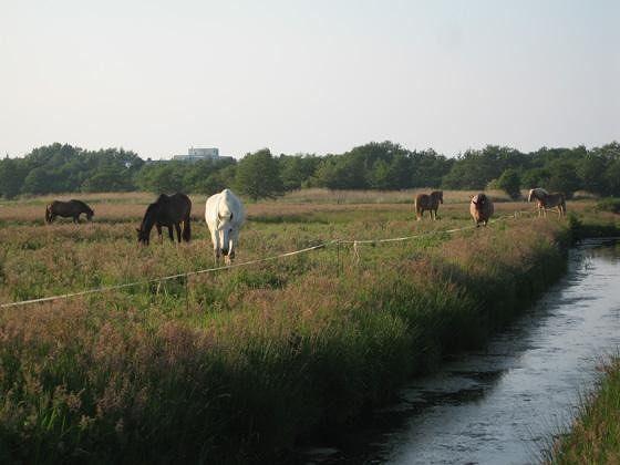 large_548833274489336-Horses_Enjoy..f_Cuxhaven.jpg