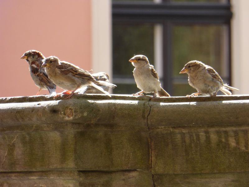 The gang assembles... - Wroclaw
