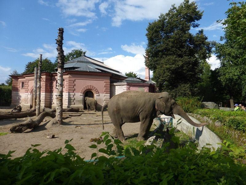 large_7173151-Zoo_Historical_Buildings_Wroclaw.jpg