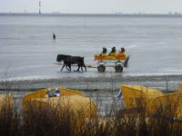 124932106792932-Horse_Powers..r_Cuxhaven.jpg