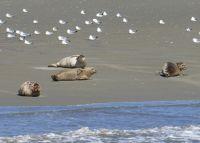 13811536792899-Seals_Restin..k_Cuxhaven.jpg