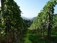 267435326755968-Walk_Up_Berg..Gengenbach.jpg