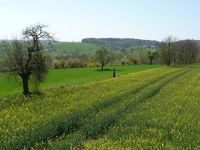 268422534806509-Hills_and_Or.._Gochsheim.jpg