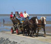 3907305-Carriage_Rides_To_Neuwerk.jpg
