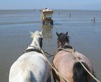 3907324-On_the_mudflat_highway_Cuxhaven.jpg