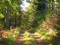 4331885-Hiking_In_The_Black_Forest.jpg