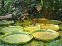 4587754-Tropical_greenhouse_Muenster.jpg