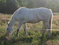 479533064489338-Horses_Enjoy..f_Cuxhaven.jpg