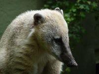 4912202-Zoo_Faces_Muenster.jpg