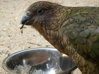 4912210-Lunchtime_at_the_Zoo_Muenster.jpg