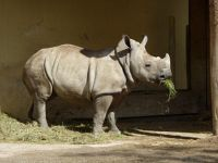 4912211-Lunchtime_at_the_Zoo_Muenster.jpg