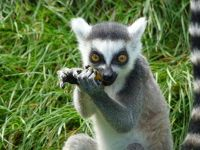 4912213-Lunchtime_at_the_Zoo_Muenster.jpg
