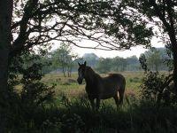 493587544489344-Horses_Enjoy..f_Cuxhaven.jpg