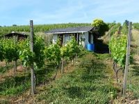 5083832-Sheds_in_the_vineyards_Weingarten.jpg