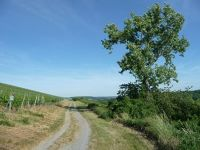 5083839-A_trail_in_the_vineyards_Weingarten.jpg