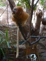 517470965105114-Animals_at_t.._der_Pfalz.jpg