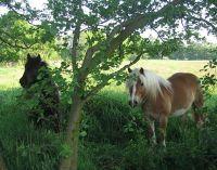 528894974489348-Horses_Enjoy..f_Cuxhaven.jpg