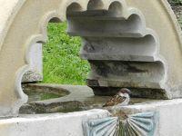 562368866185897-Sparrow_bath.._Stuttgart.jpg