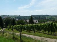569874044881045-Vineyards_ab..issembourg.jpg