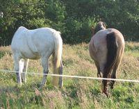 624036594489337-Horses_Enjoy..f_Cuxhaven.jpg