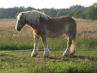 672364634489343-Horses_Enjoy..f_Cuxhaven.jpg
