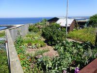 6789471-Allotment_Gardens_Helgoland.jpg