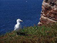 6791533-Bird_Rock_2_Seagulls_Helgoland.jpg