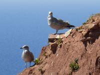 6791534-Bird_Rock_2_Seagulls_Helgoland.jpg
