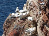 6791538-Bird_Rock_3_The_Colony_Helgoland.jpg