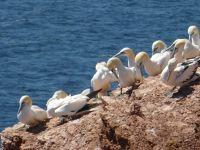6791542-Bird_Rock_3_The_Colony_Helgoland.jpg