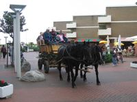 6800463-Carriage_Rides_To_Neuwerk.jpg