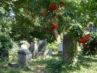 7156861-Jewish_Cemetery_Impressions_1_Wroclaw.jpg