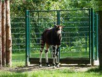 7173123-Zoo_Wroclaw.jpg