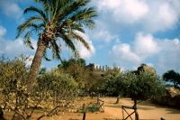 7295558-Agrigento_Valle_dei_Templi_Sicilia.jpg