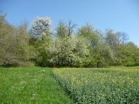 784551304806512-Hills_and_Or.._Gochsheim.jpg