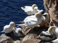 817487996791523-Bird_Rock_1_.._Helgoland.jpg