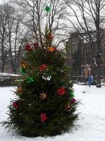 940465714994103-Christmas_tr.._Zgorzelec.jpg