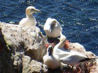 989840376791516-Bird_Rock_1_.._Helgoland.jpg
