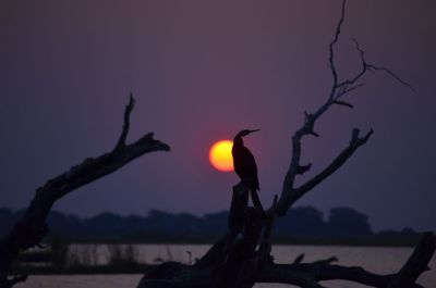 Sunset over Chobe River - Botswana