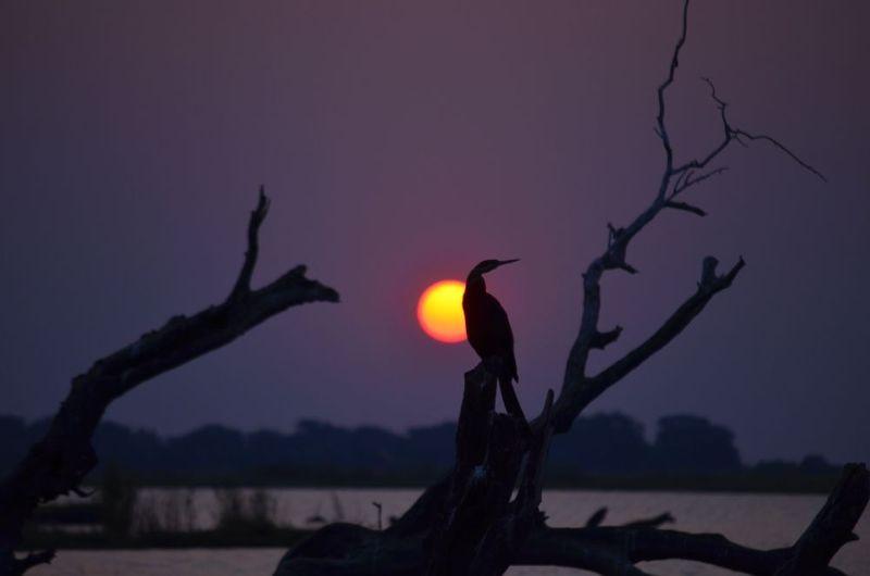 Sunset over Chobe River - Botswana