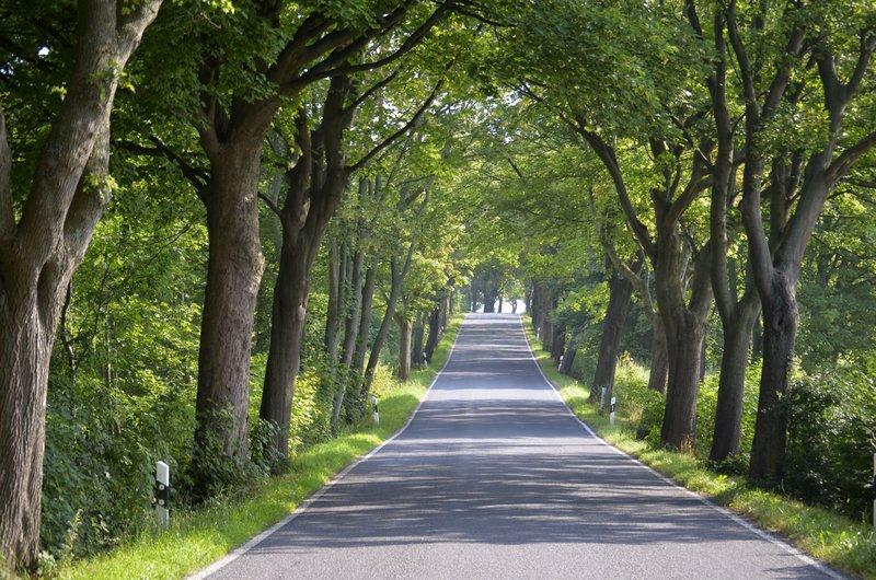 Tree-lined road on Rügen