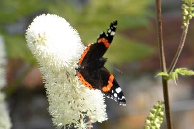 Beningbrough Hall and Gardens - Wildlife