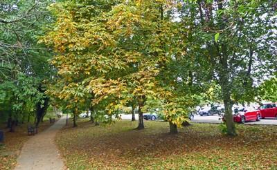 Autumn leaves in Helmsley