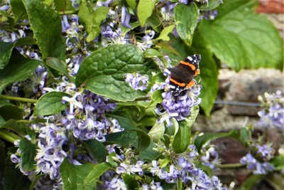 Beningbrough Hall and Gardens - Wildlife . . .