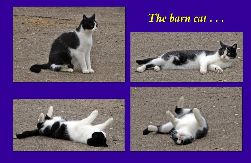 Four photos of the barn cat at our gite