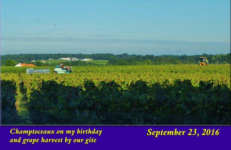Vineyard near La-Haie-Fouassière