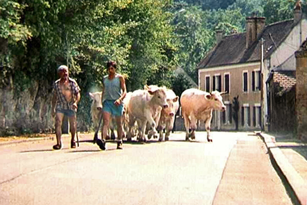 Avallon and the Running of the Bulls . . .