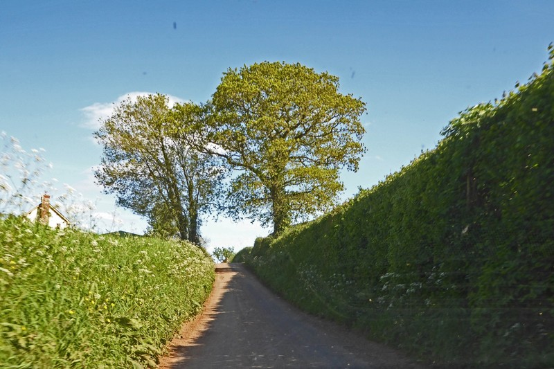 The road to our cottage . . . a little narrow
